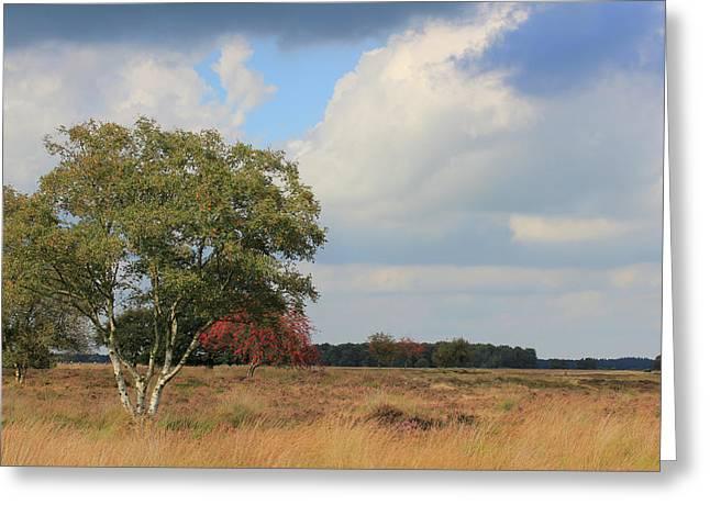 Dutch Landscape National Park Dwingelderveld Greeting Card