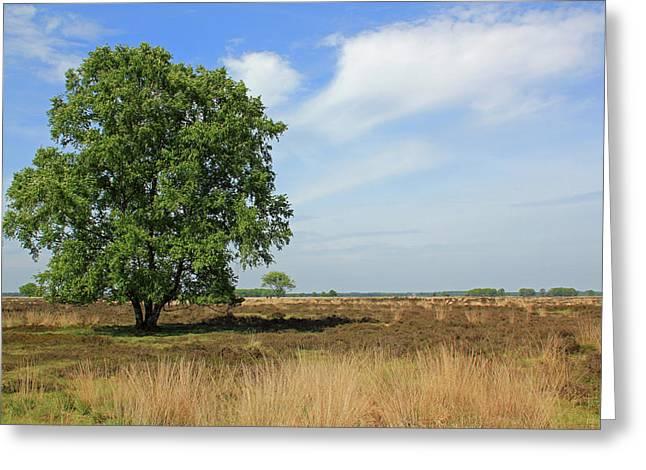 Dutch Landscape, Nature Reserve Dwingelderveld Greeting Card