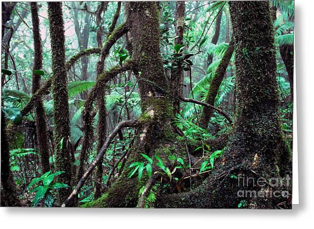 Dwarf Forest Mist El Yunque Greeting Card by Thomas R Fletcher