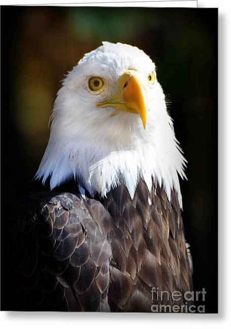 Eagle 23 Greeting Card by Marty Koch