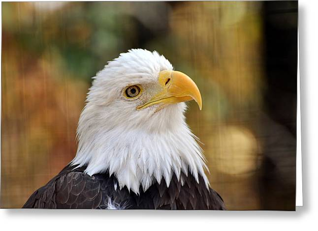 Eagle 9 Greeting Card by Marty Koch