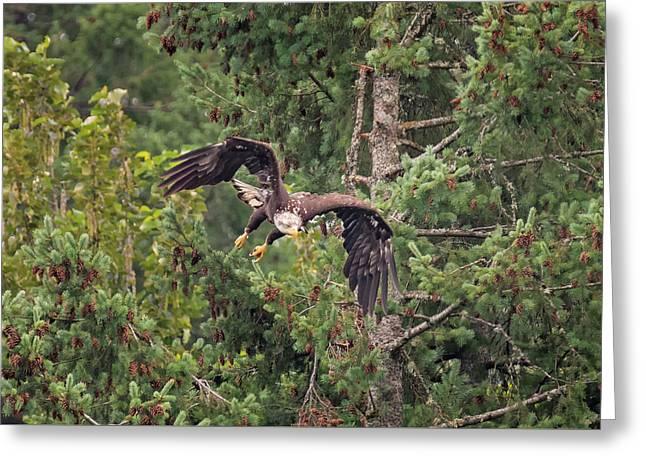 Eagle Ambush Greeting Card