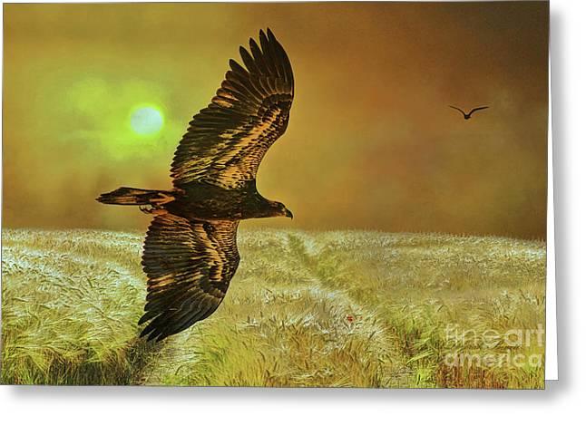Eagle At Dusk Greeting Card