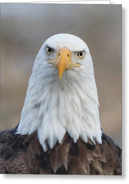 Greeting Card featuring the photograph Eagle Attitude by Angie Vogel