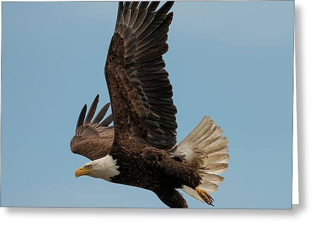 Eagle Away Greeting Card