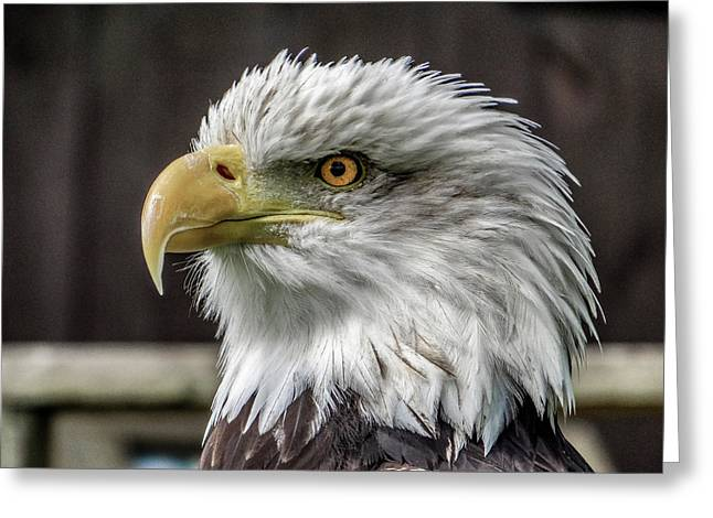 Eagle Eye Greeting Card by Angela Aird
