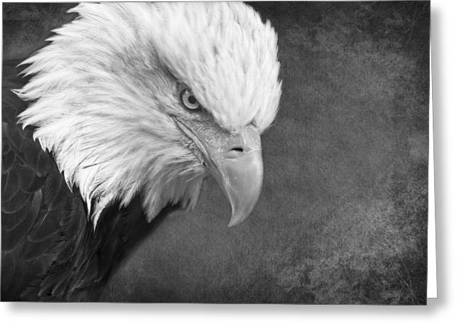 Eagle Eye D2712 Greeting Card by Wes and Dotty Weber