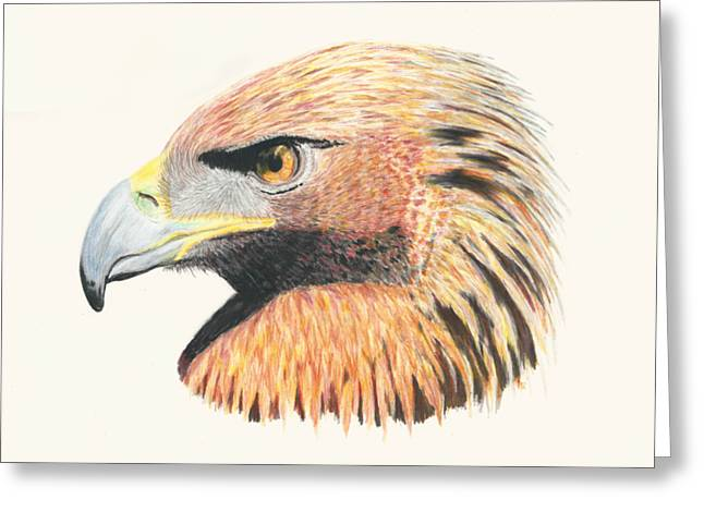Eagle Eye  No Border Greeting Card