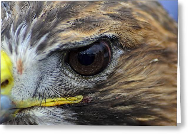 Eagle Eye Greeting Card by Rainer Kersten