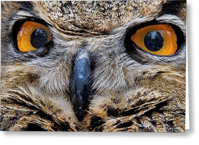 Eagle Eyes Greeting Card