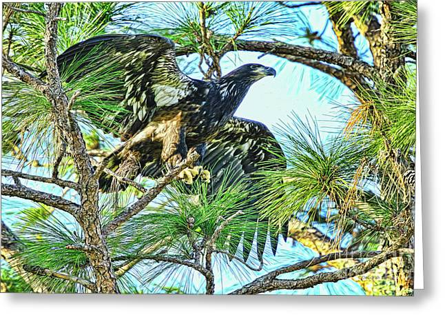 Greeting Card featuring the photograph Eagle Fledgling 2017 by Deborah Benoit