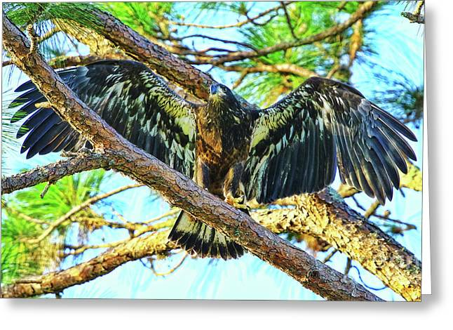 Greeting Card featuring the photograph Eagle Fledgling II 2017 by Deborah Benoit