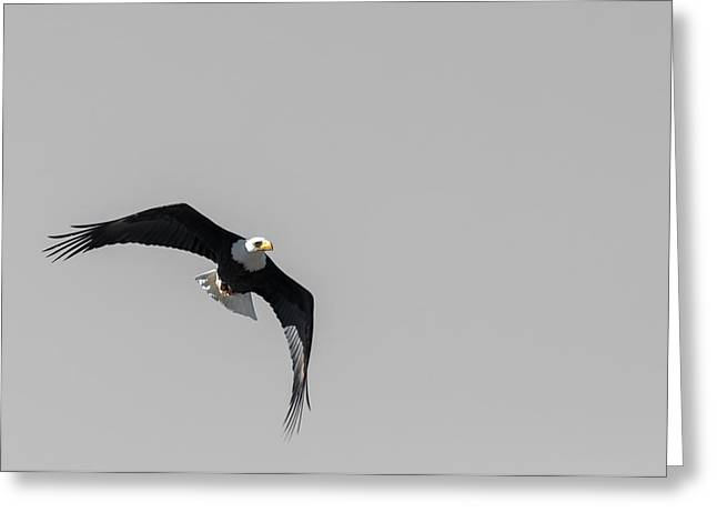 Bald Eagle Flight Greeting Card