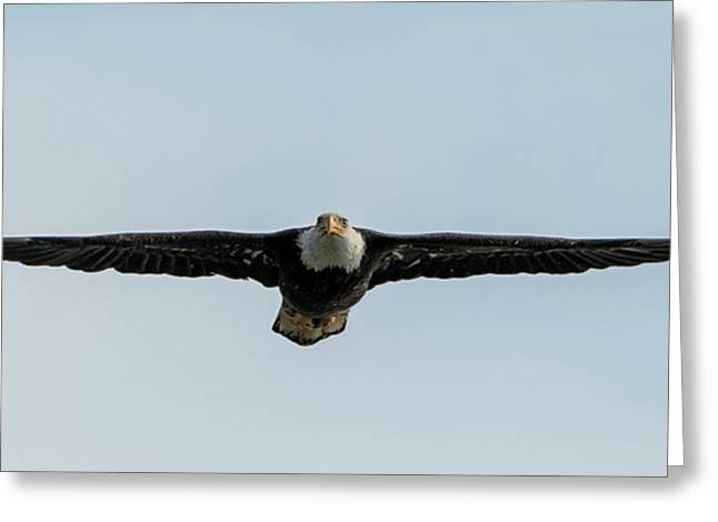 Eagle Flying At You Greeting Card