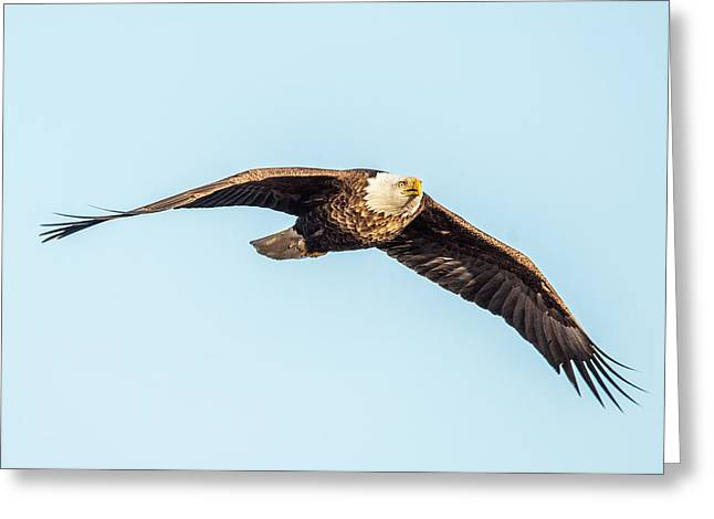 Eagle Front View Greeting Card by Paul Freidlund
