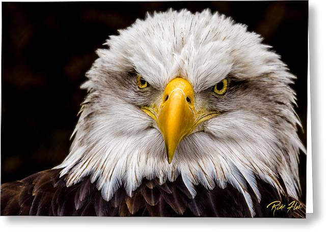 Defiant And Resolute - Bald Eagle Greeting Card