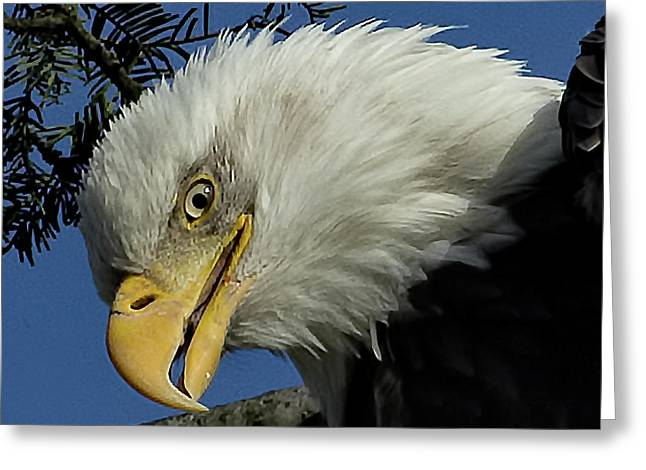 Eagle Head Greeting Card