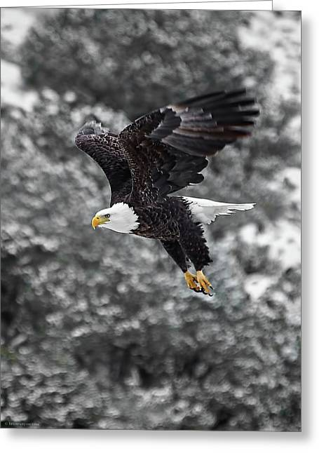 Greeting Card featuring the photograph Eagle In Flight by Britt Runyon