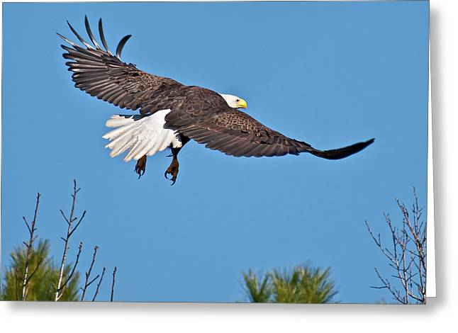 Eagle Launch Greeting Card