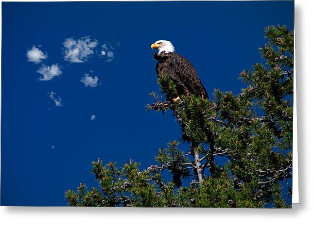 Eagle Greeting Card by Leland D Howard