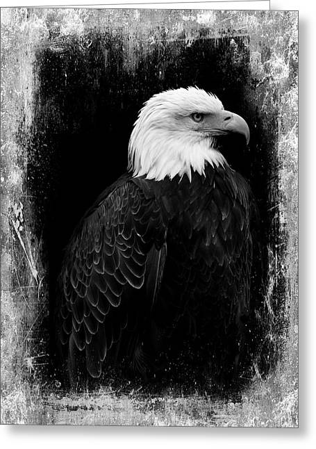 Eagle Greeting Card by Martina Fagan