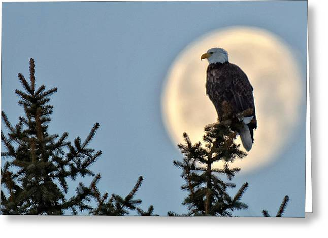 Eagle Moon Greeting Card