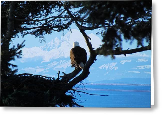 Eagle - Mt Baker - Eagles Nest Greeting Card