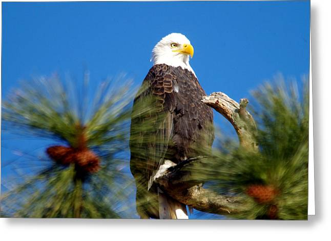 Eagle On A Sunny Day Greeting Card by Jeff Swan