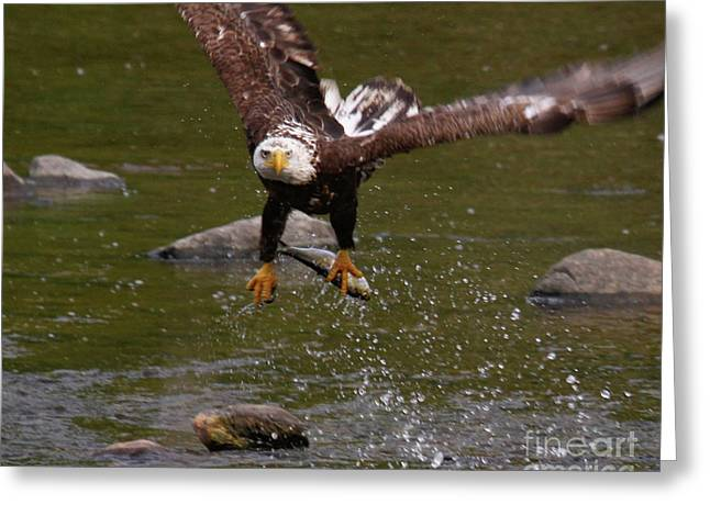 Greeting Card featuring the photograph Eagle Over Seal Rock by Debbie Stahre