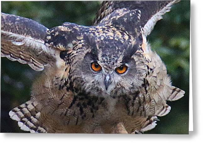 Eagle Owl Close Up Greeting Card