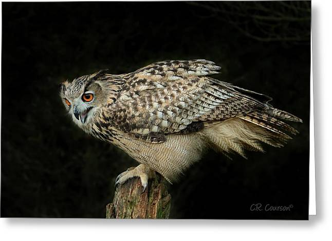 Eagle-owl Greeting Card by CR Courson