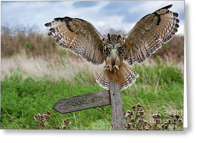 Eagle Owl On Signpost Greeting Card