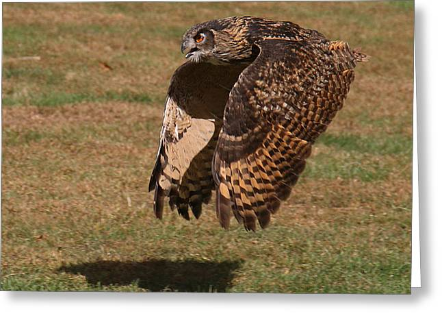 Eagle Owl On The Hunt 2 Greeting Card