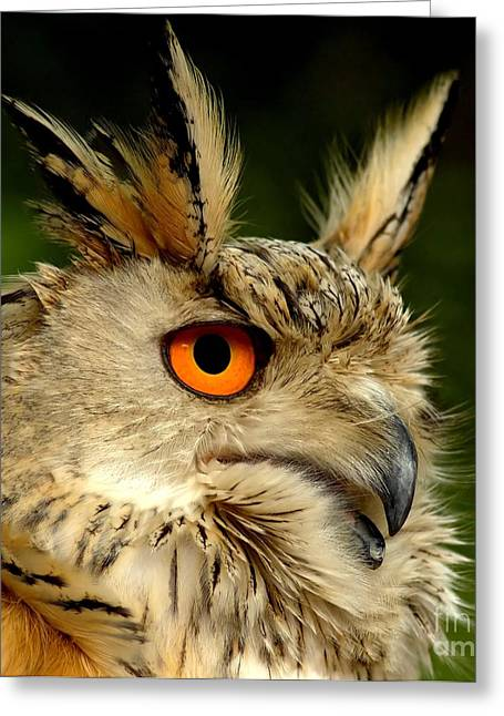 Eagle Owl Greeting Card by Jacky Gerritsen