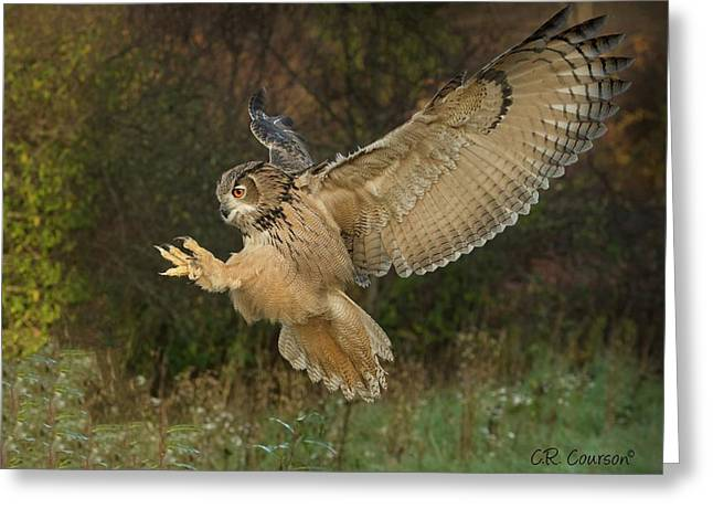 Eagle-owl Wings Back Greeting Card