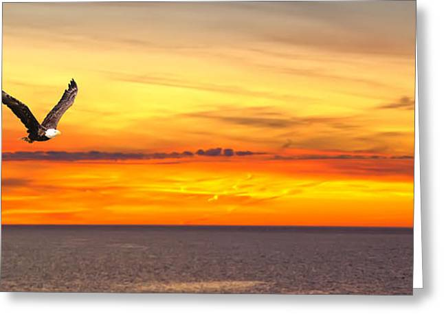 Eagle Panorama Sunset Greeting Card