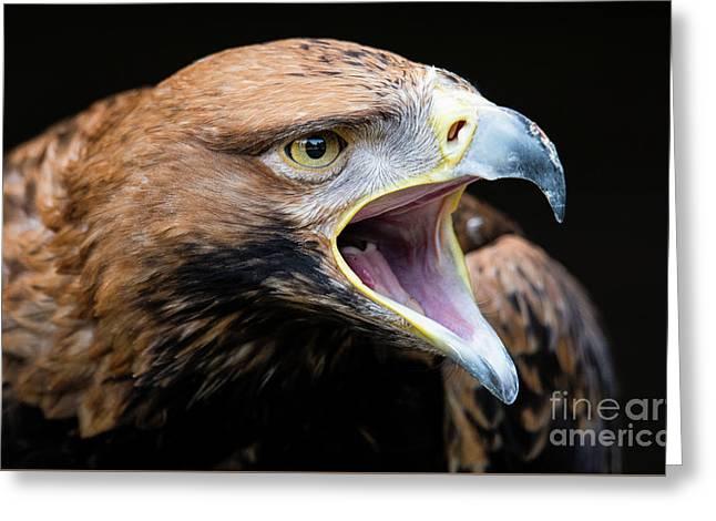 Eagle Power Greeting Card