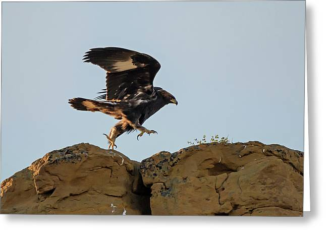 Eagle Rock Hopping Greeting Card by Loree Johnson