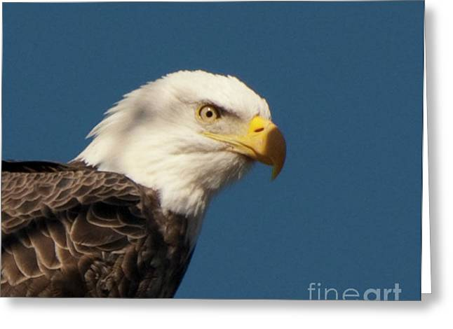 Greeting Card featuring the photograph Eagle by Rod Wiens