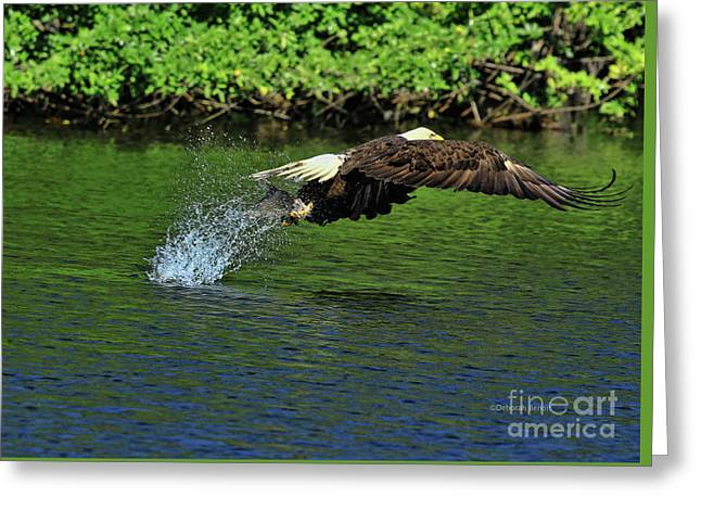 Greeting Card featuring the photograph Eagle Series Fish Catch by Deborah Benoit