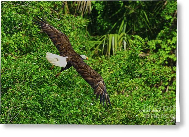 Greeting Card featuring the photograph Eagle Series Flight by Deborah Benoit