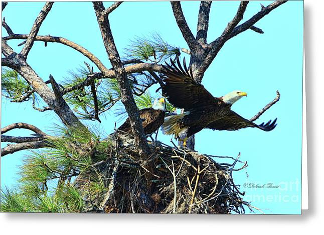 Greeting Card featuring the photograph Eagle Series The Nest by Deborah Benoit