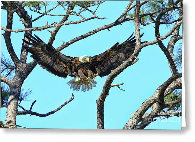 Greeting Card featuring the photograph Eagle Series Wings by Deborah Benoit