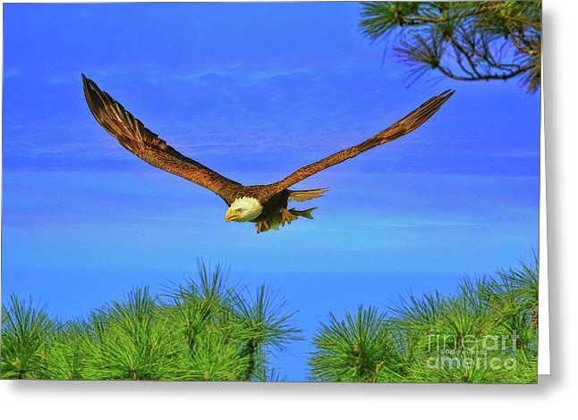 Greeting Card featuring the photograph Eagle Series Through The Trees by Deborah Benoit