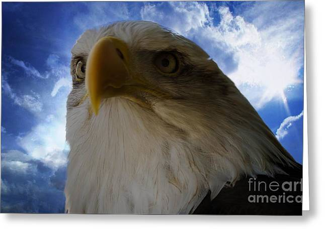 Eagle Greeting Card by Sherman Perry
