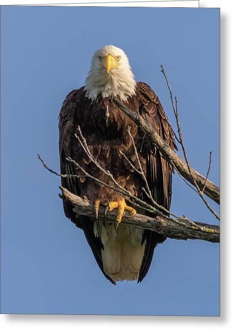Eagle Stare Greeting Card