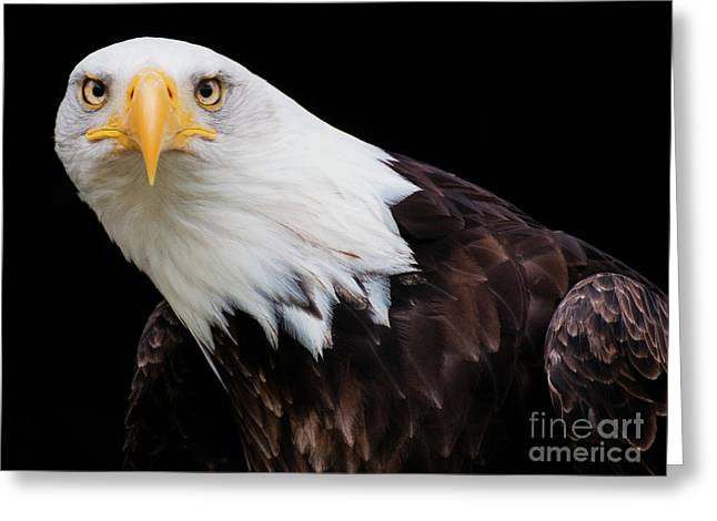 Eagle Stare Greeting Card