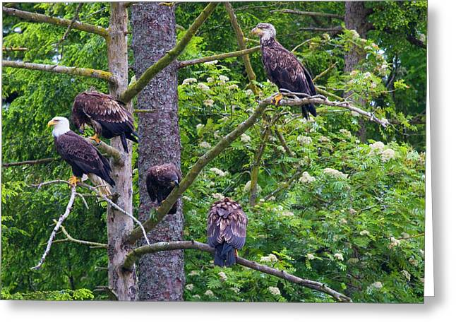 Eagle Tree Greeting Card by Mike  Dawson
