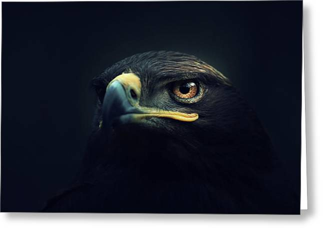 Eagle Greeting Card by Zoltan Toth