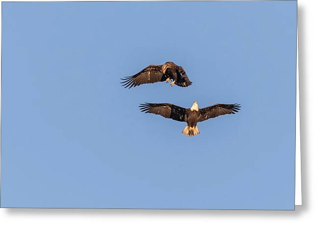 Eagles Dancing In Air Greeting Card by Thomas Young